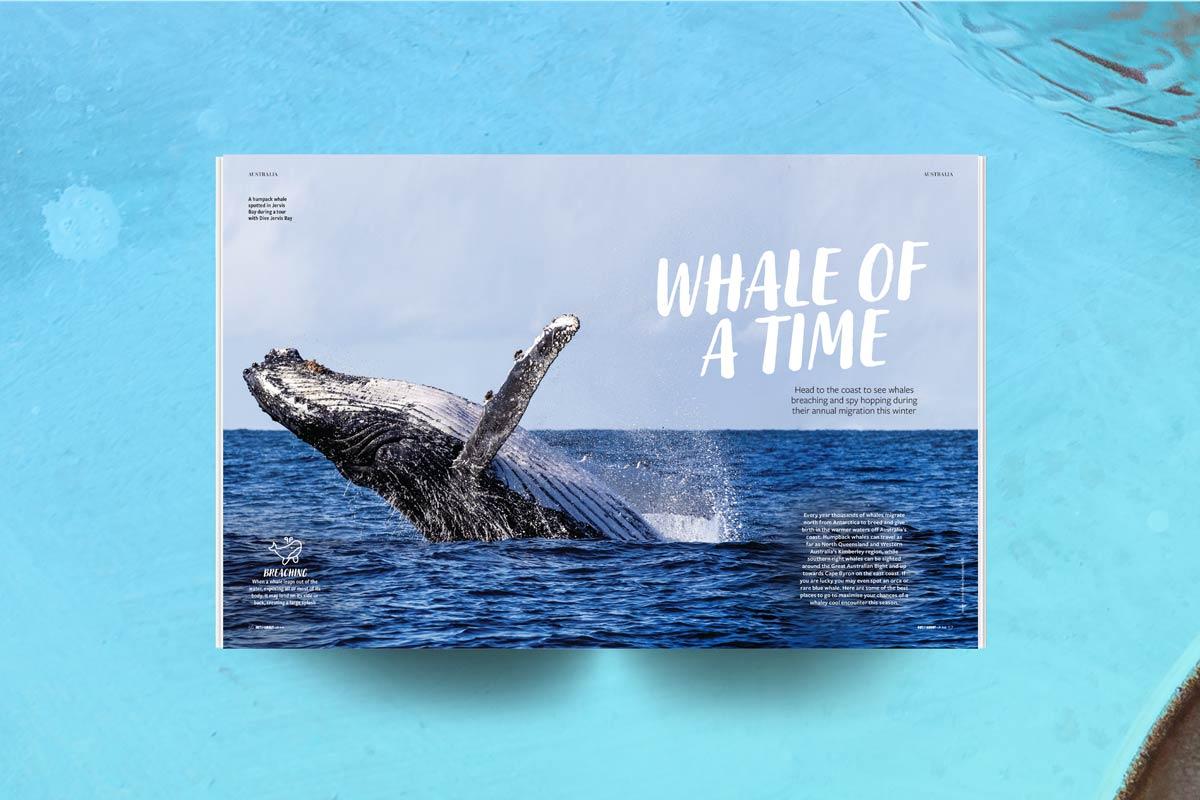 Kids travel magazine whale watching story